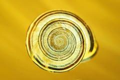 Caracol com escudo com cores e círculos foto de stock royalty free