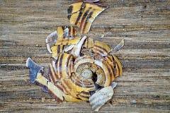 Caracol com escudo com cores e círculos imagens de stock