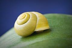 Caracol con el shell en la hoja imagenes de archivo