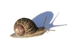 Caracol con la sombra imagen de archivo libre de regalías