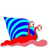 Caracol de mar Fotografia de Stock Royalty Free