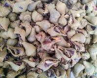 Caracol de mar de la concha Foto de archivo libre de regalías