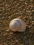 Caracol de mar en la playa 3 Foto de archivo libre de regalías