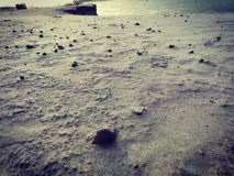 Caracol dispersado en arena del río fotos de archivo libres de regalías