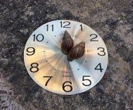 Caracol dois na cara redonda do relógio, como uma hora e umas mãos minúsculas, o'clock dois No assoalho imagens de stock