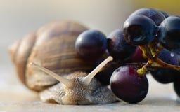 Caracol e uvas de jardim Imagens de Stock