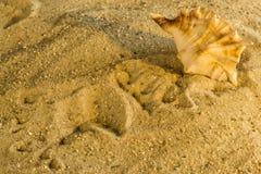 Caracol em uma praia Foto de Stock Royalty Free