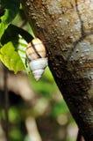 Caracol en corteza de árbol Imágenes de archivo libres de regalías