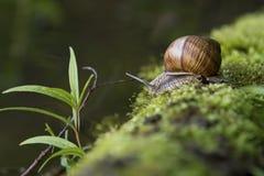 caracol en el ambiente natural Imagen de archivo libre de regalías