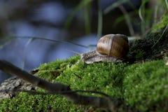 caracol en el ambiente natural Imágenes de archivo libres de regalías