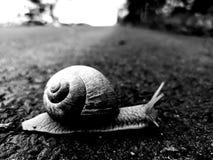 Caracol en el camino que se mueve lentamente fotografía de archivo