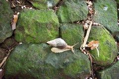Caracol en el La Vanille Natural Park Mauritius fotos de archivo