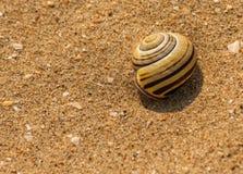 Caracol en la arena Fotos de archivo libres de regalías