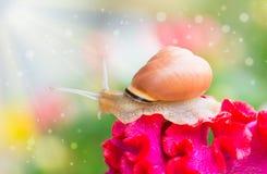 Caracol en la flor en jardín Fotos de archivo libres de regalías
