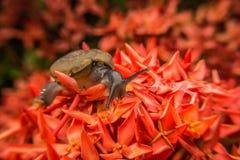 Caracol en la flor roja Foto de archivo libre de regalías