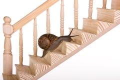 Caracol en las escaleras Fotos de archivo
