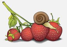 Caracol en las fresas, imágenes de la historieta, mano-dibujo Se pueden utilizar como tarjeta, cubren, imprimen, las camisas del  Foto de archivo libre de regalías