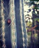 Caracol en un cactus Foto de archivo