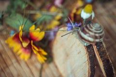 Caracol en un fondo de flores brillantes Imágenes de archivo libres de regalías