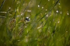 Caracol en un tallo de la hierba Fotos de archivo
