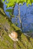 Caracol en un tronco de árbol contra el río Imagen de archivo libre de regalías