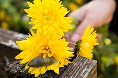 Caracol en una flor foto de archivo libre de regalías