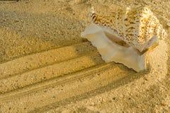 Caracol en una playa Imagen de archivo libre de regalías