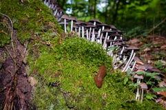 Caracol, grupo de setas, y musgo en tocón de árbol en forestSele foto de archivo