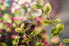 Caracol macro en jardín entre las hojas amarillas foto de archivo libre de regalías