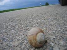 Caracol na estrada Fotografia de Stock