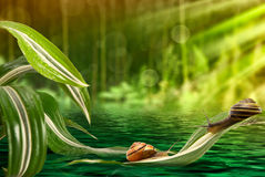 Caracol nas folhas acima da água fotografia de stock royalty free