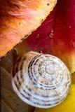 Caracol nas folhas de outono imagens de stock royalty free