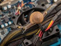 Caracol no conceito prestado serviços de manutenção do computador pessoal para lentamente, erro, v Imagens de Stock