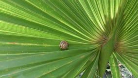 Caracol no ramo da palma Fotos de Stock Royalty Free