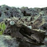 Caracol no tronco na pedra Imagem de Stock