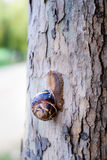 Caracol ou escargot de Burgundi fotos de stock royalty free