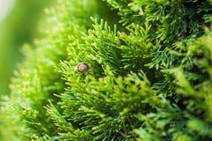 Caracol pequeno que rasteja na folha verde com gotas da ?gua em um dia ensolarado imagem de stock