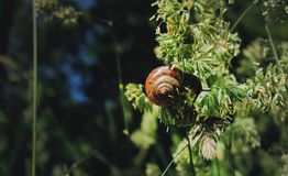 Caracol que come en una planta en bosque imágenes de archivo libres de regalías