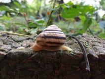 Caracol que crawing na rocha Vida animal foto de stock