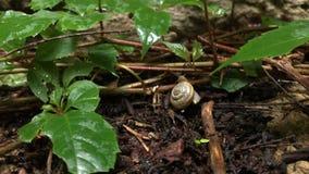 Caracol que rasteja ao longo de um trajeto ao lado da grama molhada Feche acima do tiro video estoque