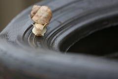 Caracol que rasteja em um pneu Imagens de Stock Royalty Free
