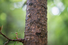 Caracol que rasteja em uma árvore Foto de Stock