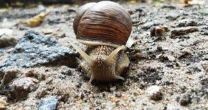 Caracol que rasteja na terra Escargot bonito foto de stock royalty free