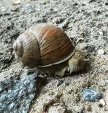 Caracol que rasteja na terra Escargot bonito foto de stock