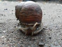 Caracol que rasteja na terra Escargot bonito fotografia de stock
