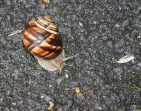 Caracol que rasteja no asfalto fotografia de stock