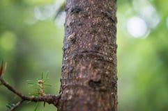 Caracol que se arrastra en un árbol Foto de archivo