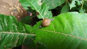 Caracol que se arrastra en verde de la hoja con el viento que sopla las hojas hasta la sacudida metrajes