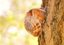 Caracol que se sienta en árbol Fotos de archivo