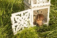 Caracol que se sienta en la lámpara Imagen de archivo libre de regalías